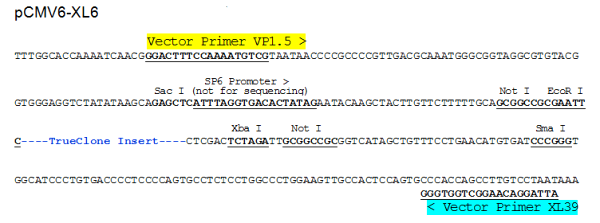 Multiple cloning site image of pCMV6-XL6