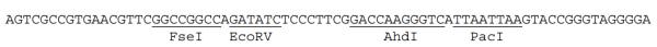 Multiple cloning site image of pSMPUW-Puro