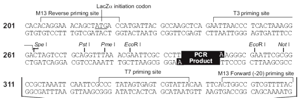 Multiple cloning site image of pCR4-TOPO