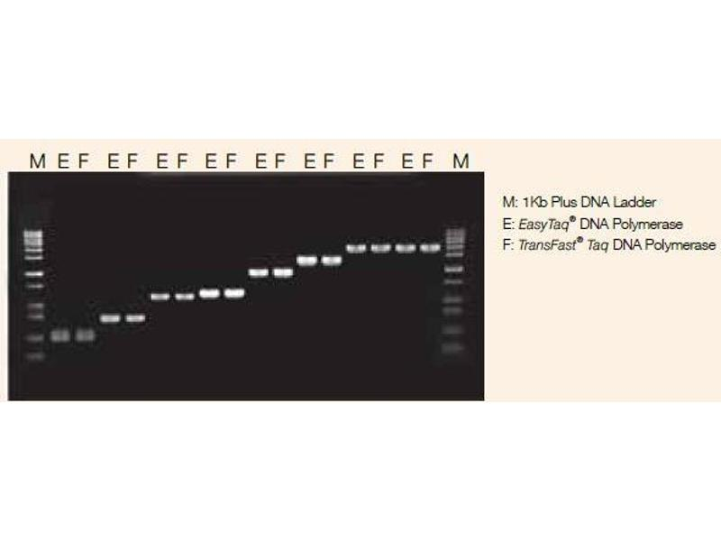image for TransFast® Taq DNA Polymerase (ABIN5519490)