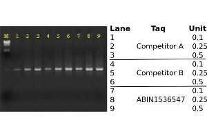 Agarose Gel Electrophoresis (AGE) image for Taq DNA Polymerase (ABIN1536547)