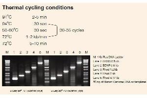 Image no. 1 for 2xEasyTaq® PCR SuperMix ( -dye ) (ABIN5519404)