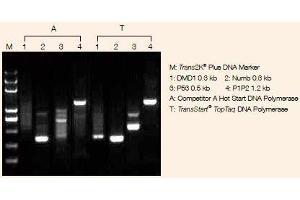 image for TransStart® TopTaq DNA Polymerase (ABIN5519570)