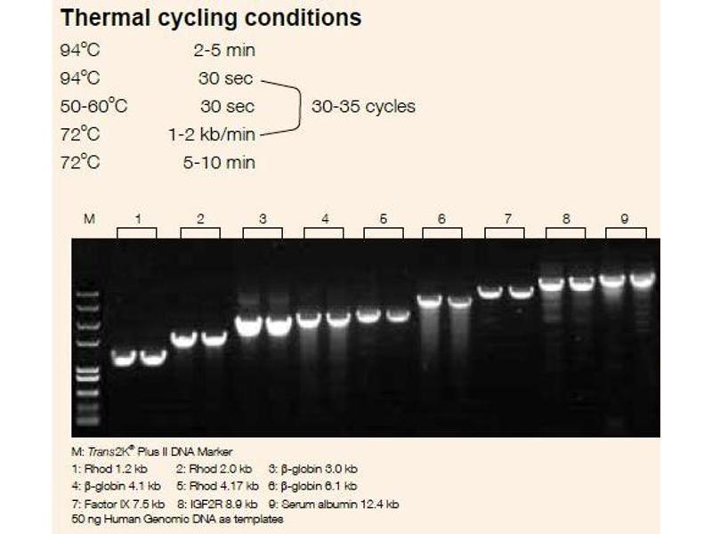 image for TransStart® TopTaq DNA Polymerase (ABIN5519569)