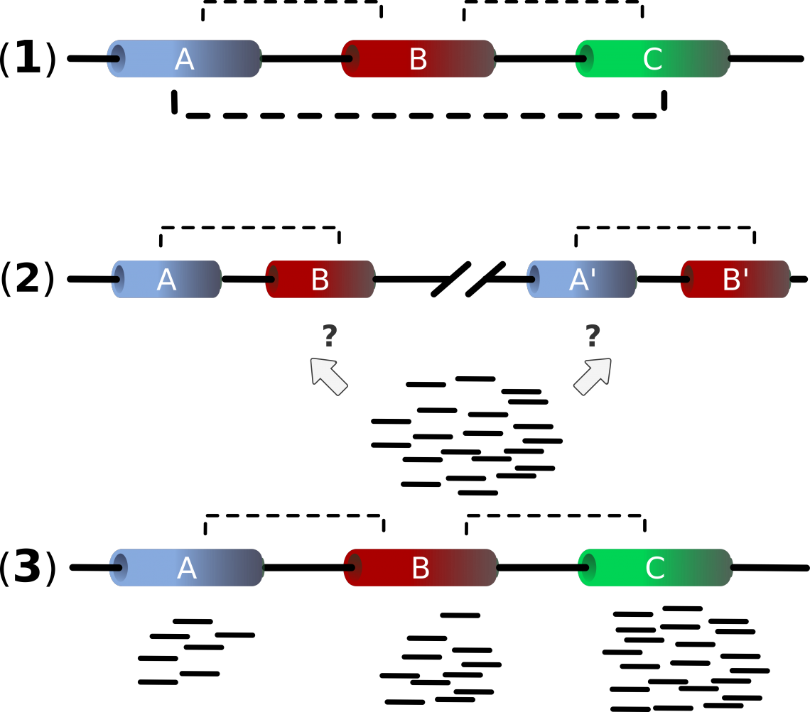 Figure 1: Problems occuring in Housekeeping Gene detection