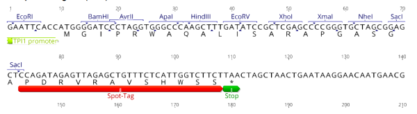 Multiple cloning site image of pSpot6