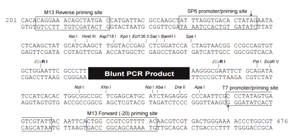 Multiple cloning site image of pCR-BluntII-TOPO